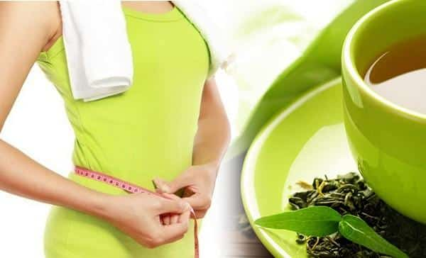 green tea to weight loss